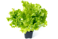 Stack of green fresh salad in a cup isolated on white Stock Photo