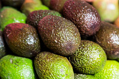 Stack of green and purple Avocado Stock Photos