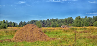 Stack of harvested hay Royalty Free Stock Image