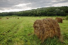 Stack of hay Stock Photography