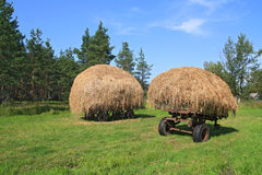 Stack hay Stock Photography