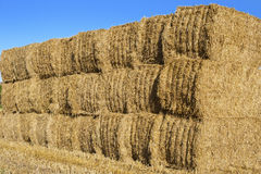 Stack of hay bales in a field, England. Stock Image