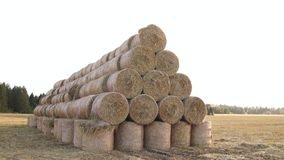 A stack of hay. Hay bales in a meadow. A stack of hay. Stacked Straw Hay Bails. Hay bales in a meadow. Rural field in autumn with bales of hay. Straw rolls on stock footage