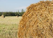 Stack of hay on the field on a background of green forest and sky Royalty Free Stock Photography