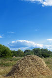 Stack  hay  grass Stock Image