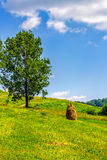 Stack of hay on hillside near the tree. Stack of hay in the mountains on a meadow hill side with tree Royalty Free Stock Image