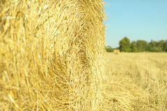 Stack of hay Straw bale on the field after harvest Royalty Free Stock Image