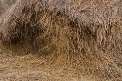 Stack hay straw Stock Photography