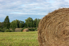 A stack of hay twisted in a circle in the foreground. Forest and blue sky in the background Royalty Free Stock Image
