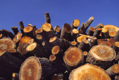Stack hewed wood Stock Images