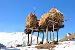 A stack of Highland barley straw Royalty Free Stock Image