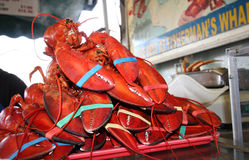 Stack of live red lobsters Royalty Free Stock Images