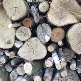 Stack of log Royalty Free Stock Images