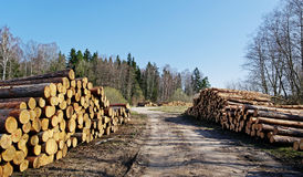 Stack of logs. Royalty Free Stock Image