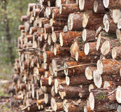 Stack of logs Stock Images