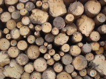 Stack of logs Stock Photo