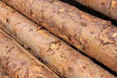 Stack of Logs Stock Image