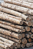 Stack of logs as background Royalty Free Stock Image