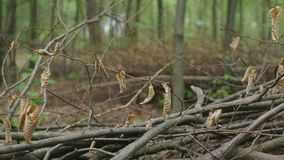 Stack of logs chopped trees. close up stock footage