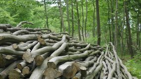Stack of logs chopped trees. close up stock video footage