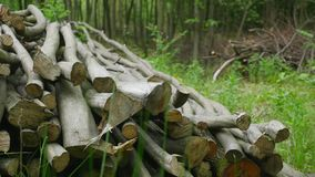 Stack of logs chopped trees. close up stock video