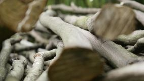 Stack of logs chopped trees. close up. Stack of logs chopped trees, close up stock footage