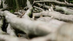 Stack of logs chopped trees. close up. Stack of logs chopped trees, close up stock video footage