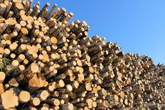 Large Stack of Logs and Blue Sky Royalty Free Stock Photo
