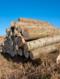 Stack of logs in the field stock photography