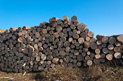 Stack of logs in the field Stock Photo