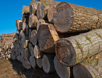 Stack of logs in the field royalty free stock photos