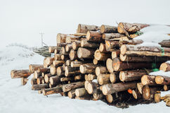 stack of logs in the forest covered with snow Stock Photo
