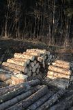 Stack of logs Stock Photos