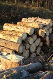 Stack of logs Royalty Free Stock Photos