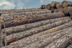 Stack of logs lying in the forest Royalty Free Stock Photo