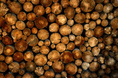 Stack of Logs Pine Trees Royalty Free Stock Photo