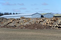 Stack of logs by sawmill. Image of a large pile of logs next to a sawmill in winter Stock Photography