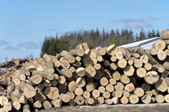 Stack of logs by sawmill. Image of a large pile of logs next to a sawmill in winter Stock Image