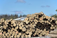 Stack of logs by sawmill. Image of a large pile of logs next to a sawmill in winter Royalty Free Stock Image