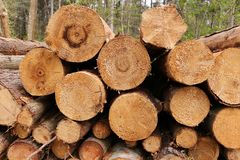 A stack of logs. In a forest royalty free stock photos