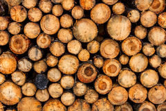 Stack of logs Royalty Free Stock Photo
