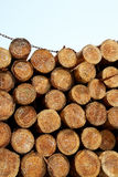 Stack of logs Royalty Free Stock Images