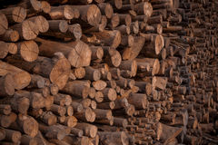 Stack of mangrove wood for making cooking charcoal Royalty Free Stock Image