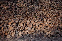 Stack of mangrove wood for making cooking charcoal Stock Images