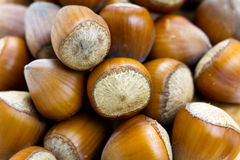 Stack of many hazelnuts , close up shot Stock Photo
