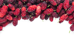 Stack of mulberries  on  white . Royalty Free Stock Images