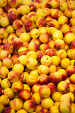 Stack of Nectarines Royalty Free Stock Photography
