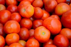 Stack of numerous tomatoes Royalty Free Stock Images