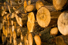 Stack of oak logs Stock Image