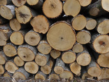 Stack of Oak Logs. A pile of White Oak (Quercus alba) logs awaiting transport to the sawmill Royalty Free Stock Image